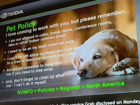 the NVIDIA dog policy
