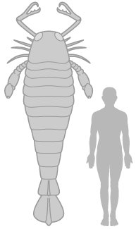Scientists discover fossil of 2.5 meter long scorpion