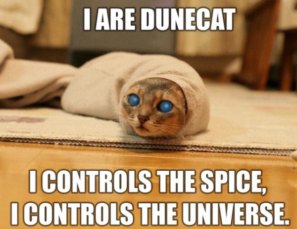 Funny cat intermezzo